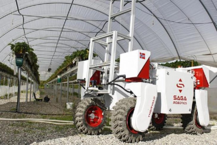 робот на службі виробників ягід