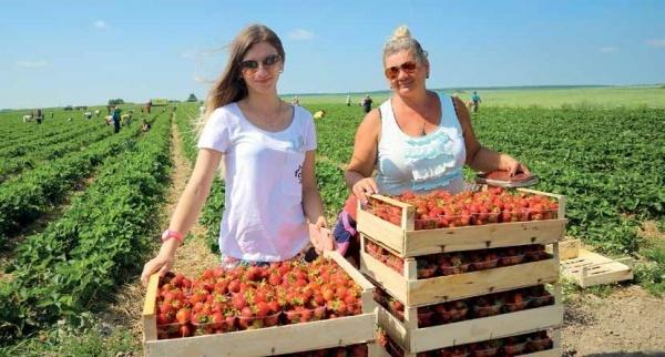 власний бізнес на ягодах