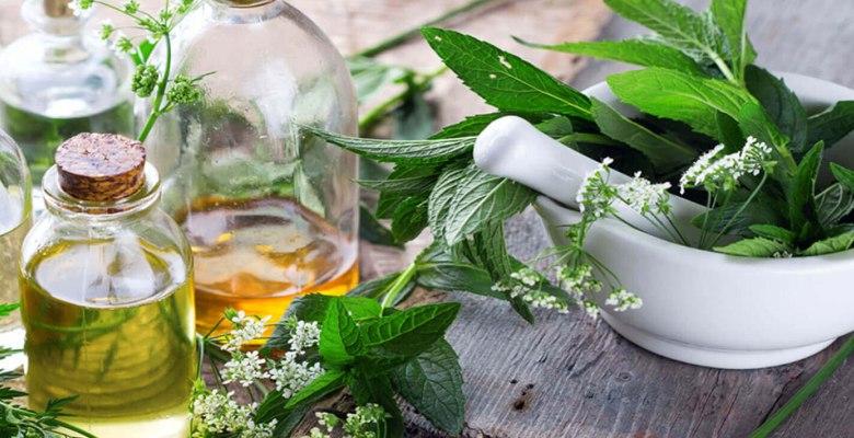 Ученые выяснили как получить растительное масло не только из фруктов или  семян, но и из листьев - Новини АПК | Головні фермерські новини України