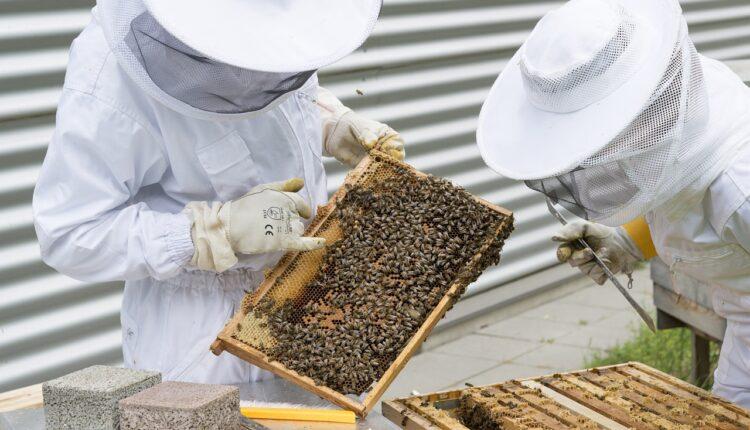 бджолярі на пасіці