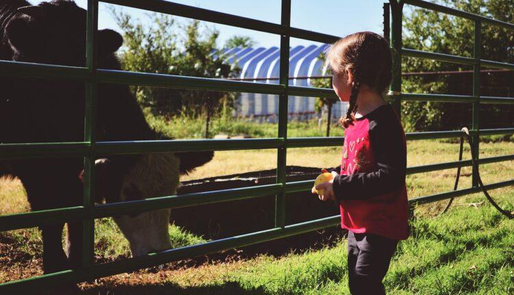 дівчинка на фермі