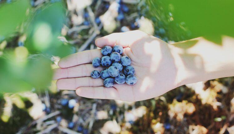 ягоди у руці