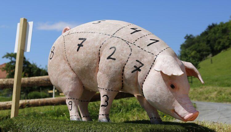 макет свині