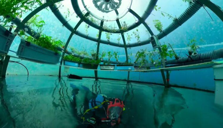 підводний сад