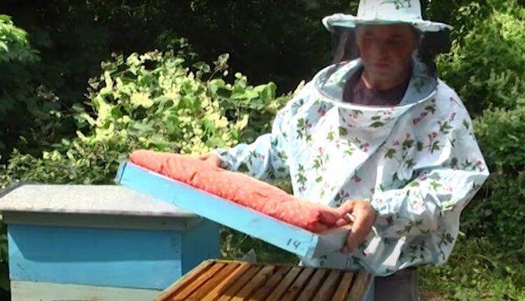 бджоляр в масці