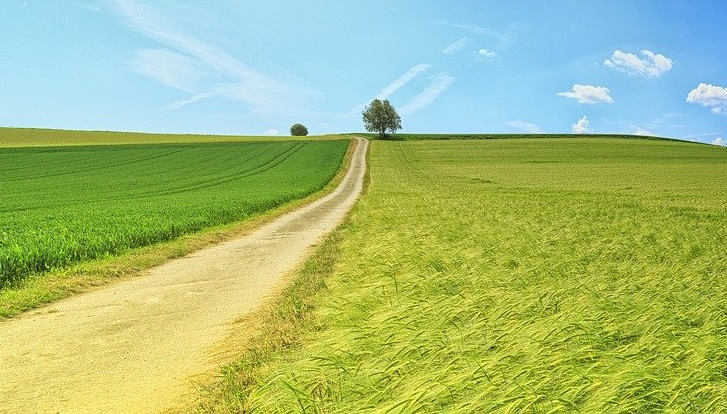 дорога у полі