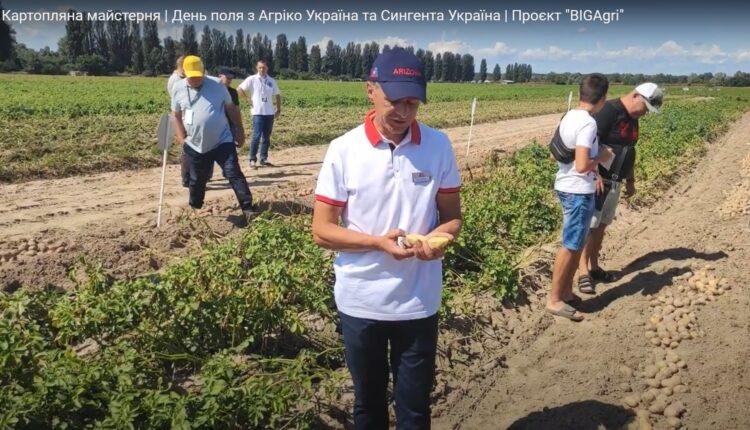картопляні поля