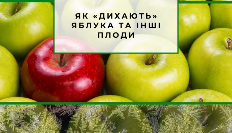 охолоджені яблука
