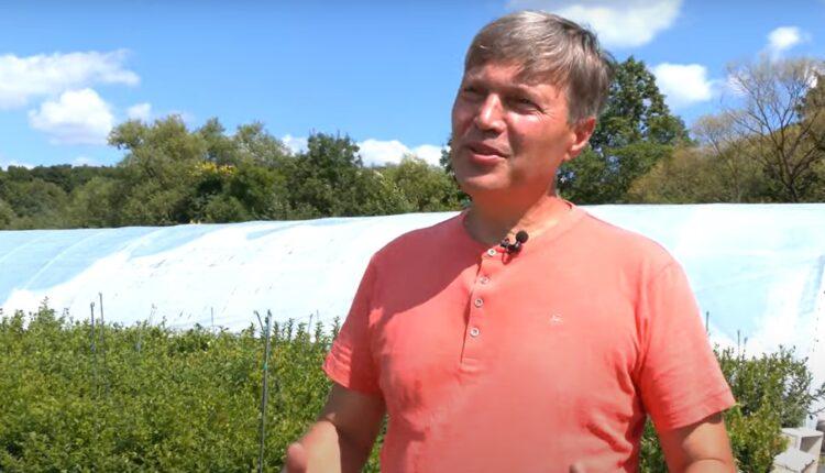 фермер на плантації лохини