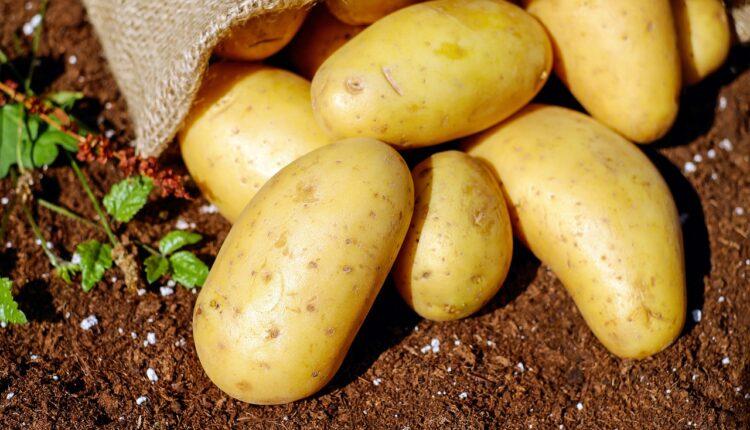 картопля на землі